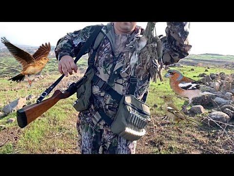Skylark -chaffinch Hunting In Akkar صيد الصلنج و المطوق في عكار لبنان