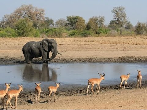 WildEarth Live Africa sunrise 18-7 Nkuhuma pride & 3 Cubs & BBoy