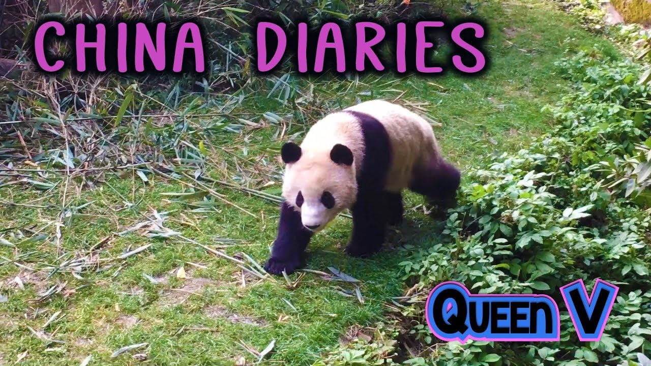 Queen V - China Diaries