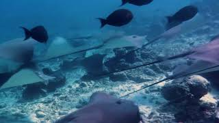 Visit Maldives, Soon!