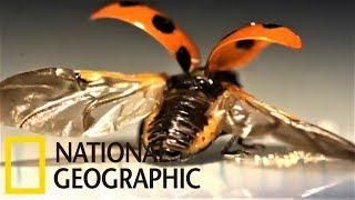 「你可以再靠近一點!」你有如此清楚看過瓢蟲的翅膀嗎?《國家地理》雜誌