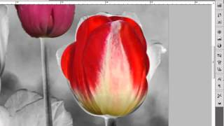 Color Splash effekt #photoshoptutorial (Norwegian).mp4