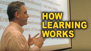 Jordan Peterson: How Learning Works on a Deep Biological Level