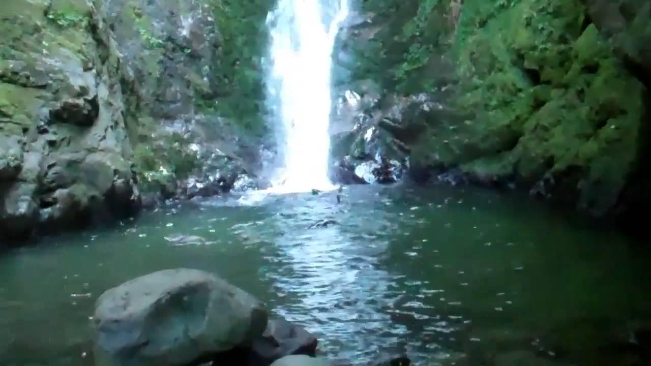 Seals At Ohau Stream Kaikoura Nz