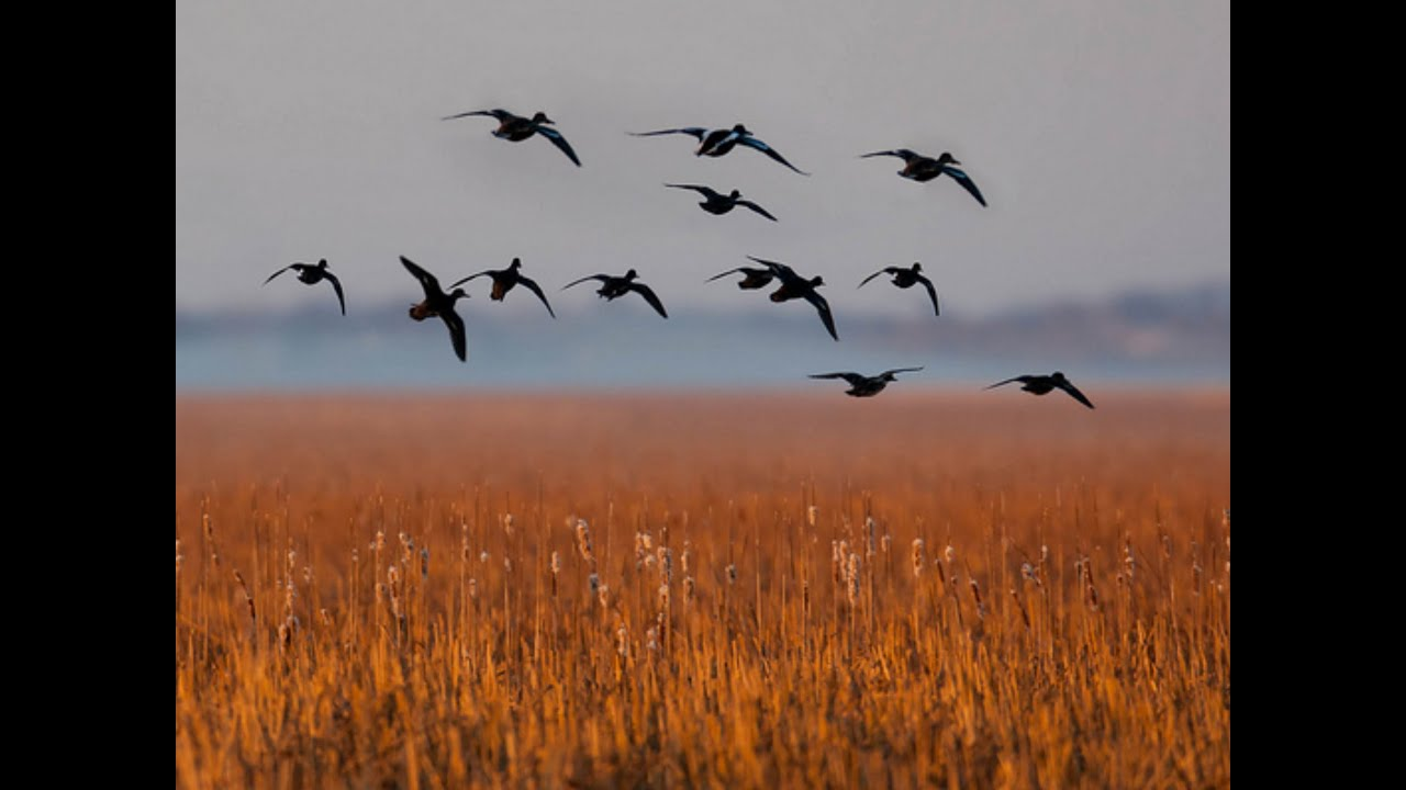 Delta Waterfowl : News : Events