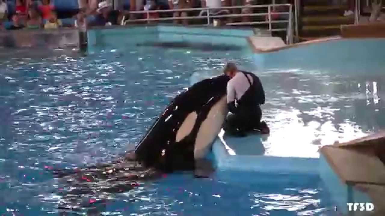 Orca Kisses Trainer Youtube