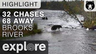 Bear 32 Chases 68 - Katmai National Park - Live Cam Highlight