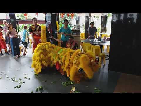 Singapore Wei Jin Lion on Single Pole and Cai Qing Performances at AMK BLK 232 on 9/2/19 CNY Day 5