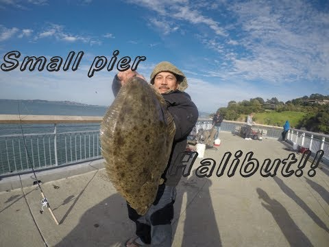 Paradise Pier Ca, : Biggest Halibut ever caught on this pier???!!!