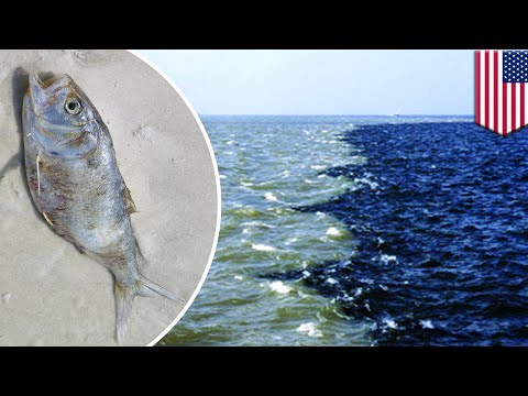 Dead zone: Low-oxygen 'dead zone' the size of Jersey recorded in the Gulf of Mexico - TomoNews