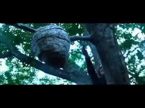 Hunger Games Bee Scene Comedy Youtube