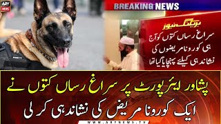 Sniffer Dogs Detect Covid-infected Passenger At Peshawar Airport