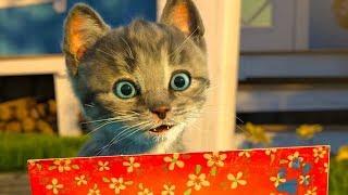 Сборник мультиков про котят ВСЕ СЕРИИ ПОДРЯД котик БУБУ три кота и маленький котенок #УШАСТИК КИДС