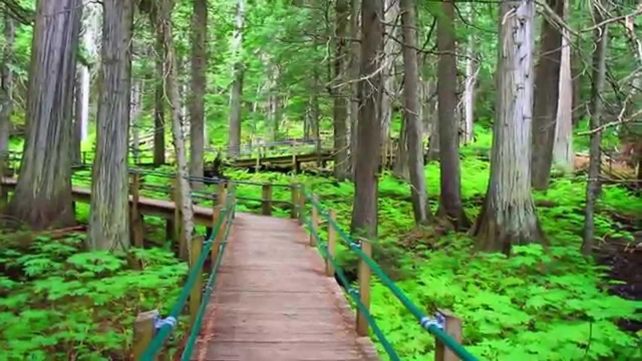 56d652bf9702e2 Hemlock Grove Boardwalk Trail - Glacier National Park of Canada  HD ...