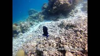 How they clean up and feed underwater.Oceanesse I.D,Scuba diving