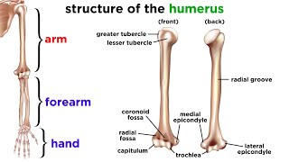 Download The Skeletal System Mp3 and Videos