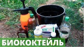 видео Защита растений