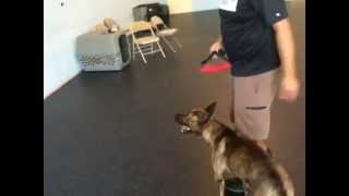 One Of The Coolest Dog Tricks!!