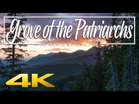 Grove of the Patriarchs - Mt Rainier National Park 4K