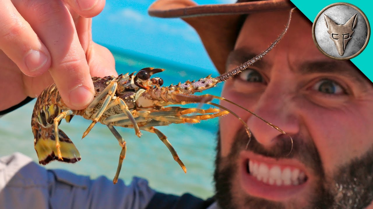 spiky-sea-creatures