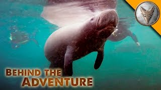 How to Swim with Manatees!