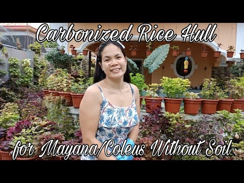 Carbonized Rice Hull for Mayana/Coleus Plants