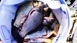 ВОТ ЭТО ЛАПТИ КАЖДЫЕ 30 СЕКУНД рыбалка весной 2020
