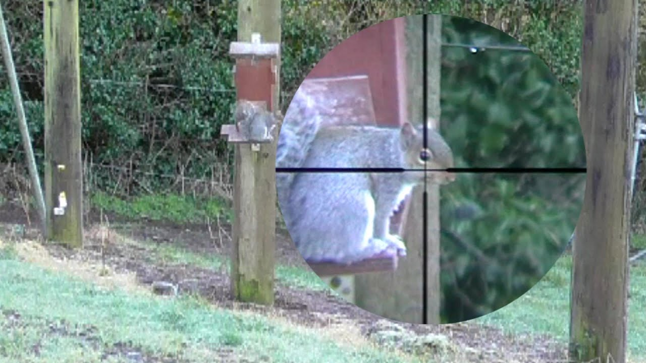 Pest Control with Air Rifles - Scope Cam Squirrel Shooting - A Frosty Morning