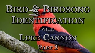 Bird & Birdsong Identification with Luke Cannon Part 2