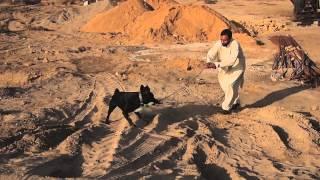 Dog Training In Pakistan (short-film) - Escaped Convict