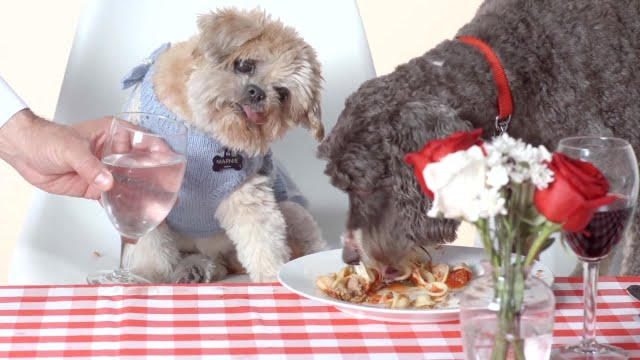 Adorable Rescue Dogs Dine on 4-Star Meal ft. Marnie the Dog