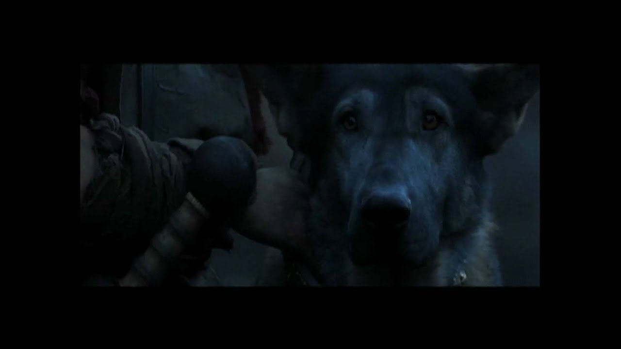 Movies Like Max The Dog