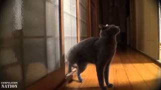 Крутое видео про животных = ржач