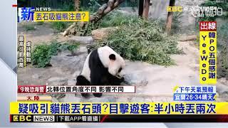 最新》疑吸引貓熊丟石頭?目擊遊客:半小時丟兩次