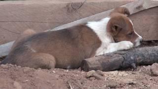 Sweet Pup Needs Home 8 18