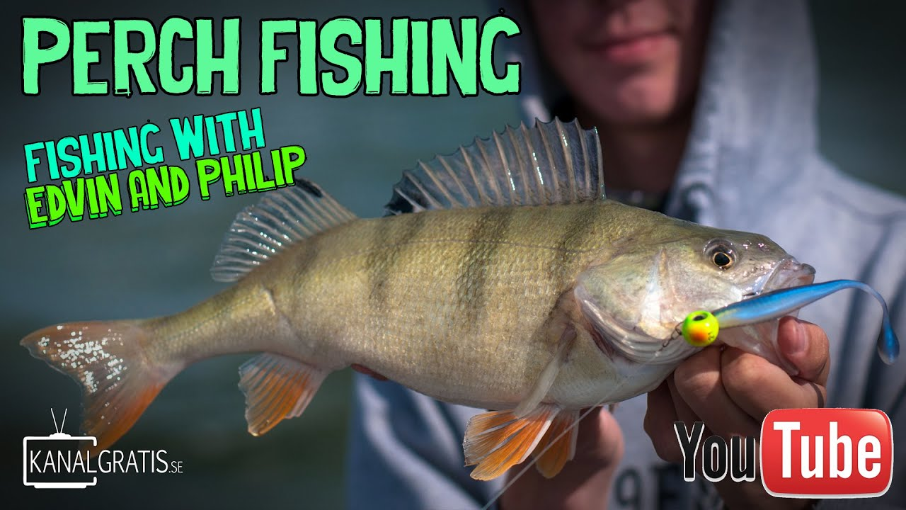 summer perch fishing with lures | fishing with edvin and philip, Fishing Bait