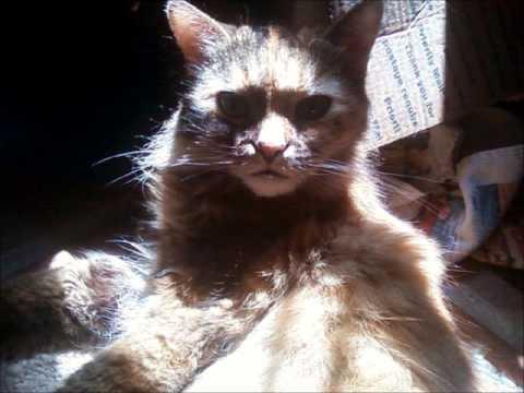 Our Sweet Kitty, Miha