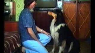 Собака говорит