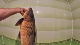Супер улов Накрыл сазана на 5 75 кг Рыбалка Кастинговая сеть