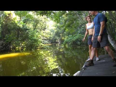 Jordan goes swimming in a Leesburg Creek