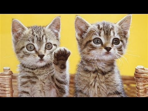 The best cat pictures