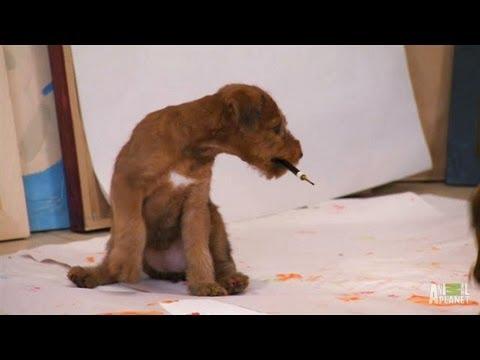 Artistic Irish Terrier Pups | Too Cute!