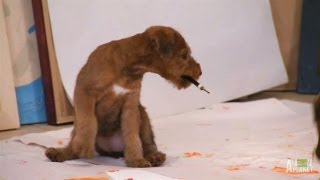 Artistic Irish Terrier Pups | Too Cute!