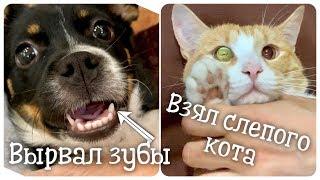 Вырвал зубы у щенка и взял слепого кота