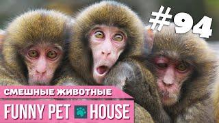 СМЕШНЫЕ ЖИВОТНЫЕ И ПИТОМЦЫ #94 АВГУСТ 2019   Funny Pet House