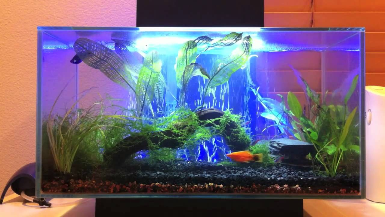 Fluval Edge With Led Light And Air Stone Youtube