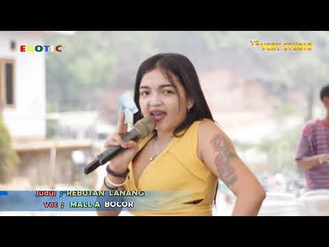 #live EXOTIC Tgl. 2 SEPTEMBER - REBUTAN LANANG MALLA BOCOR