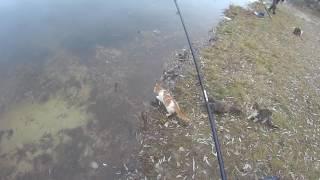С котами шутки плохи.Прикол на рыбалке