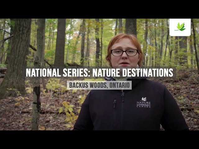 Nature Destinations - Backus Woods - The Nature Conservancy of Canada