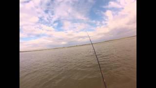 Рыбалка Кастинговой сетью на р Обь, Крупный лещ и язь